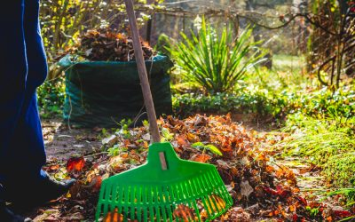 You Should Start Working on Your Lawn Now Before Springtime